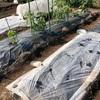 市民菜園で野菜づくりに挑戦!6