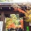 2017年11月21日  京都~なばなの里