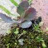 レンガとコンクリートの隙間 の 苔と雑草