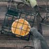 鳥たちは自分の身を自分で守っている