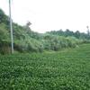 草を持ち出すのも重要になる茶草場の管理