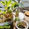 【大失敗】ラディッシュをアクアポニックス栽培