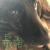 甲斐犬サン、藤川投手を見習えるのかの巻〜ドォスル??(*´・д・)ノ(・д・`*)ドォシヨッヵ・・・