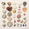 本日寒い!逗子海岸で人相変わりながら貝殻拾うの巻