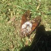 これでもう真夏は怖くない?道に転がってるセミの生死の見分け方。あいつらの脚を見れば一発です!
