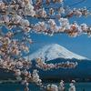 プレバト俳句ランキング。夏井先生が厳選した歴代俳句ベスト50【2020年6月】