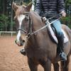 御殿場といえば馬ですよね!?富士のふもとで馬とたわむれる「クラブニューシーズンの乗馬体験」