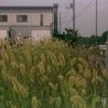 Photo NO.378 / 群生