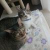 猫にストレスをかけにくいシャンプーの方法!【動画あり】