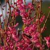 服部緑地公園で梅の花と鳥さんの撮影