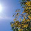 11月初日は、秋を感じるコントラスト