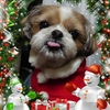 くーちゃんサンタのメリー・クリスマス♪