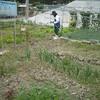 農作業21日目