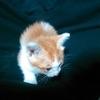 猫と田舎暮らし3