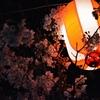 夜桜2 in五月山公園 @池田市