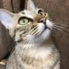 【猫ブログ】猫ちゃん同士のコミュニケーションとは・・・