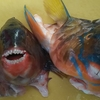 【釣り魚料理】釣った魚を食す~ウマイ