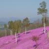 北海道の春を満喫しよう!イベント情報