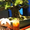 丸ビル最上階!! 暗闇坂 宮下 丸ビル店さんのディナー☆*:.。. o(≧▽≦)o .。.:*☆