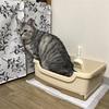 猫の体調管理