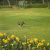 【一日一枚写真】インドの野良犬達 Part.9【一眼レフ】