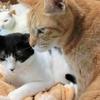 猫は可愛いけど、限度を知ろう!多頭飼い崩壊の悲劇