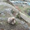 【4歳&1歳】子連れ渋温泉旅行記〜温泉に入るお猿さん