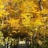 紅葉の火打山登山(2017年10月11日)
