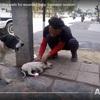 ケガをした子犬の救助をとらえた動画が1ヵ月で2,400万再生 子犬の回復力と救助の努力に感動と敬意