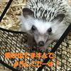 チコ次郎さんのブログで紹介していただきました!