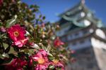 名古屋の人気モーニング「小倉カイザー」を食べ、いざ名古屋城へ!