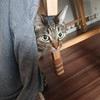 【朗報】ツン多めの猫かまどさんがデレを見せた瞬間