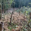 今年の『竹との戦い!』 -その1-