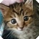 hibineko's blog