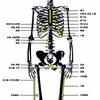 理学療法士でも内臓を治療できる?