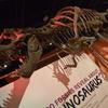 【アメリカ大陸横断一人旅】 ワシントンD.C.編1日目~国立自然史博物館~
