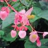 10月9日誕生日の花と花言葉歌句