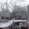 東京、雪降ってます!