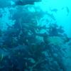 これは現実…? 館山の伊戸でサメまみれのダイビング