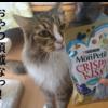 猫にお勧めおやつは?我が家の愛猫たちが大好きなおやつをご紹介します(キャットフードの選び方)!