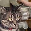 買い物・寄席・猫のジロリくん