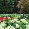 庭園に咲く約90種1000株のあじさい!松本市「弘長寺のあじさい」