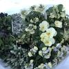寄せ植え用の花を花屋さんで買ってきました♡花屋さん行くだけで幸せな気分になります