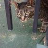 何となく撮ってみた猫画像