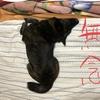 甲斐犬愛護会関西支部鑑賞会中止されるゥッの巻〜ムキィィィィイ━━━━━(#`Д´)凸