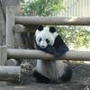 上野動物園で思わぬ出会いがあった話あれこれ。