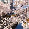 やっぱり目黒川の桜は美しい♡開花状況・アクセス・オススメの撮影スポットは?《2021》