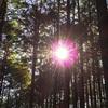 熊野古道④ 熊野古道を何度も歩き中辺路完全踏破を達成している私のオススメ中辺路ルート【春編】
