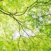 【大自然に行こう!】ストレス解消には五感を刺激せよ。