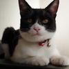 今日の黒猫モモ&白黒猫ナナの動画ー605